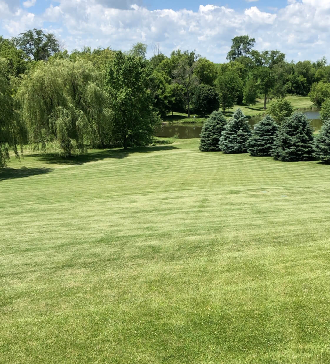 Backyard lawn of Residential Property